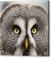 The Great Grey Owl  Acrylic Print
