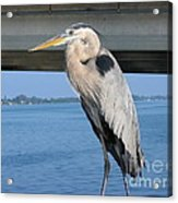 The Great Heron Acrylic Print
