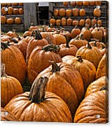 The Great Pumpkin Farm Acrylic Print by Peter Chilelli