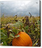 The Great Pumpkin Acrylic Print