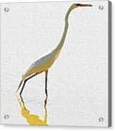 The Greater Egret With Style Acrylic Print