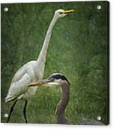 The Greats - Birds That Is... Acrylic Print