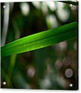The Green Blade Acrylic Print