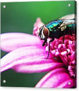 The Green Fly Acrylic Print