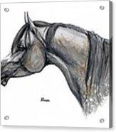 The Grey Arabian Horse 11 Acrylic Print