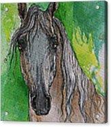 The Grey Arabian Horse 17 Acrylic Print