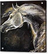 The Grey Arabian Horse 9 Acrylic Print