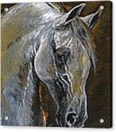 The Grey Arabian Horse Oil Painting Acrylic Print