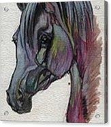 The Grey Horse Drawing 1 Acrylic Print