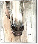 The Grey Horse Portrait 2014 02 10 Acrylic Print