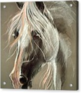 The Grey Horse Soft Pastel Acrylic Print