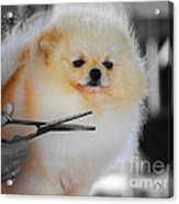The Groomer Acrylic Print