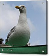 The Gull On The Roof Acrylic Print