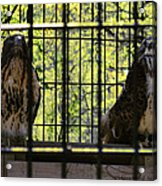 The Hawks From The Series The Imprint Of Man In Nature Acrylic Print