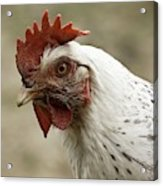 The Head Of A Rooster Acrylic Print