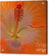 The Heart Of A Hibiscus Acrylic Print