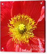 The Heart Of A Red Poppy Acrylic Print