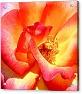The Heart Of A Rose Acrylic Print