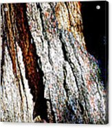 The Heart Of Barkness In Mariposa Grove In Yosemite National Park-california  Acrylic Print