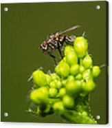 The Hidden World Of Khaki Square - Featured 3 Acrylic Print