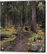 The High Forest Acrylic Print by Eric Glaser