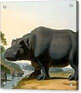 The Hippopotamus, 1804 Acrylic Print