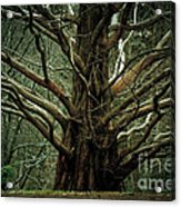 The Hobbit Tree Acrylic Print