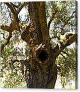 The Hole Tree Santa Margarita Lake Acrylic Print