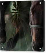 The Horse And The Dandelion Acrylic Print