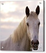 The Horse In The Setting Sun Acrylic Print