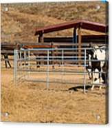 The Horse Ranch 3 Acrylic Print