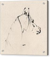 The Horse Sketch Acrylic Print