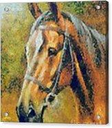 The Horse's Head Acrylic Print