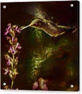 The Hummingbird Digital Art Acrylic Print