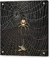 The Hunter And Its Pray - A Gold Fly Caught By A Gold Spider Acrylic Print