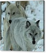 The Hunters Acrylic Print