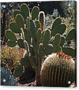 The Huntington Desert Garden Acrylic Print by Rona Black