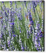 The Importance Of Bees Acrylic Print