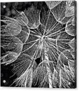 The Inner Weed Monochrome Acrylic Print