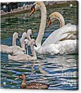 The Insular Family Acrylic Print