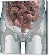 The Intestines Acrylic Print