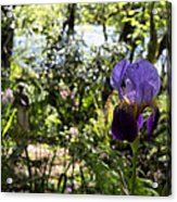 The Iris And St Francis Acrylic Print
