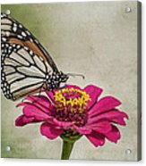 The Joy Of A Butterfly Acrylic Print