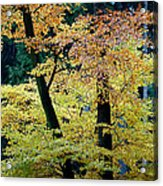 The Joy Of Being In Autumn Acrylic Print