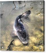 The King Of The Pond Acrylic Print