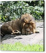 The King On His Day Off Acrylic Print