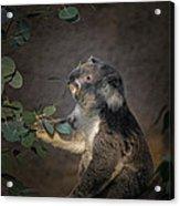 The Koala Acrylic Print