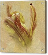 The Lady And The Parrot Tulip Acrylic Print