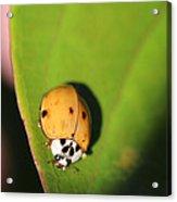 The Lady Bug Acrylic Print