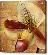 The Lady Slipper Orchid Acrylic Print